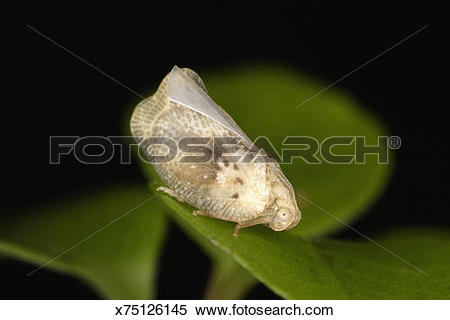 Planthopper clipart #13, Download drawings