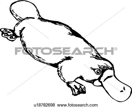 Platypus clipart #8, Download drawings