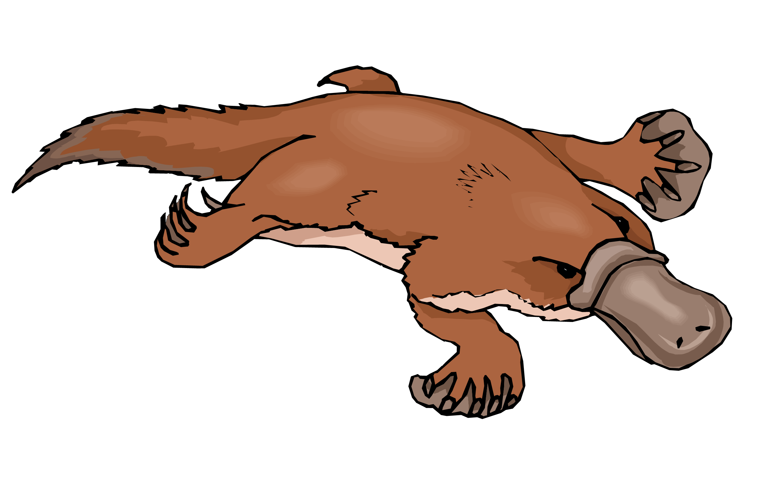 Platypus clipart #5, Download drawings