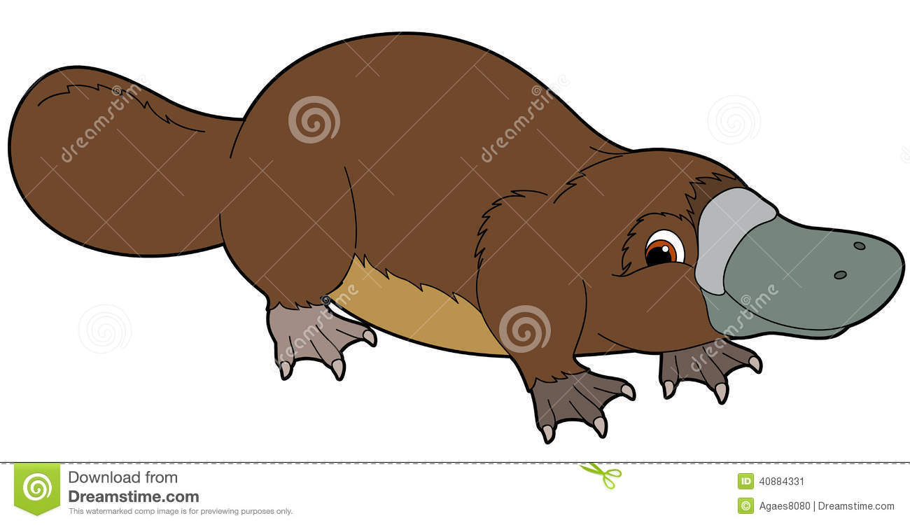 Platypus clipart #20, Download drawings