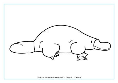 Platypus coloring download platypus coloring for Duckbill platypus coloring page