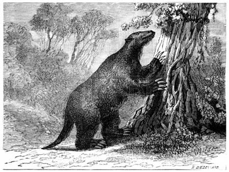 Pliocene clipart #4, Download drawings
