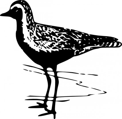 Plover clipart #5, Download drawings