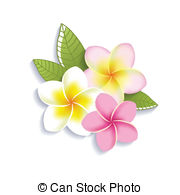 Plumeria clipart #17, Download drawings