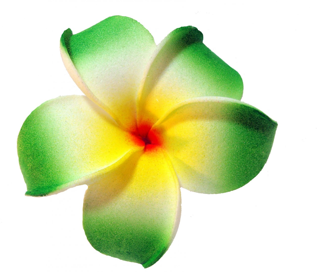 Plumeria clipart #2, Download drawings