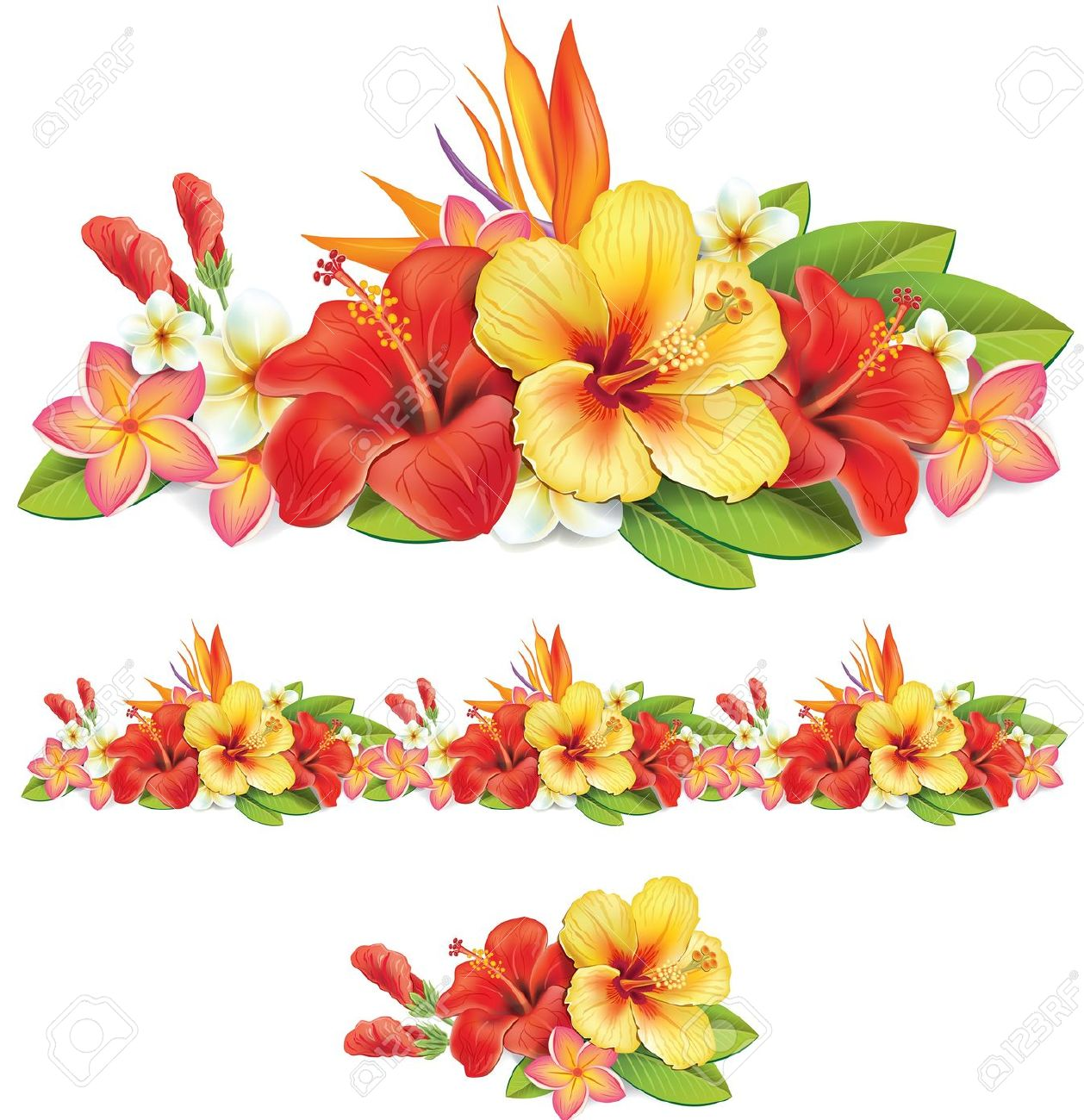 Plumeria clipart #5, Download drawings