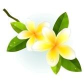 Plumeria clipart #7, Download drawings