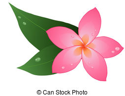 Plumeria clipart #16, Download drawings