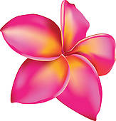 Plumeria clipart #18, Download drawings