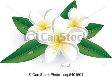 Plumeria clipart #12, Download drawings
