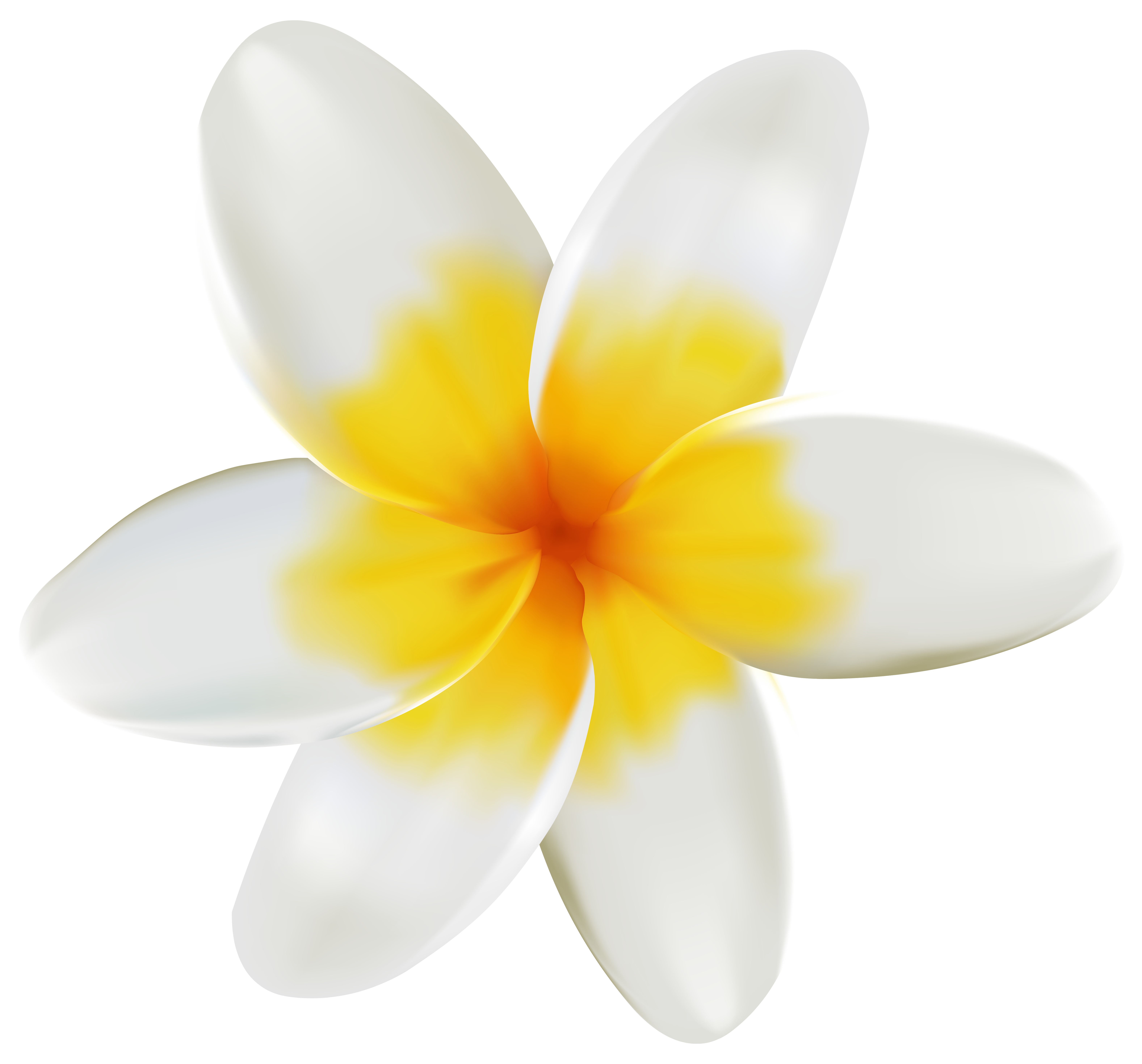 Plumeria clipart #1, Download drawings