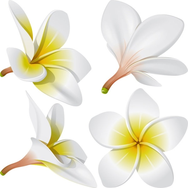 Plumeria svg #241, Download drawings