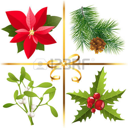 Poinsettia clipart #10, Download drawings