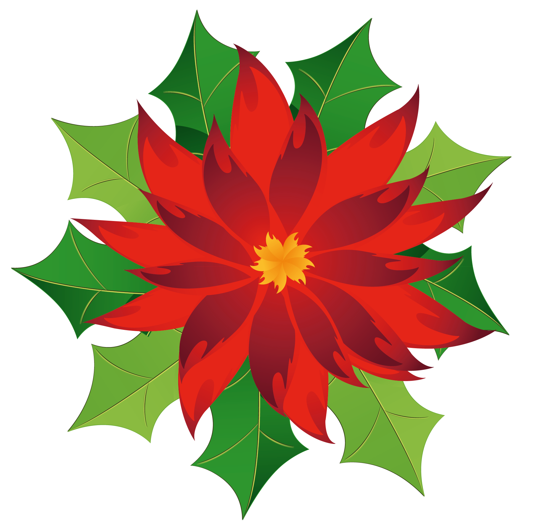 Poinsettia clipart #1, Download drawings