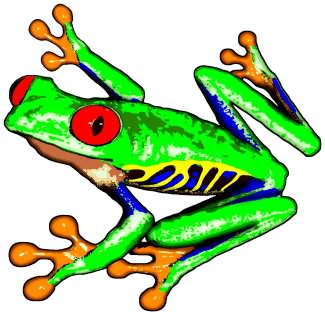 Poison Dart Frog clipart #18, Download drawings