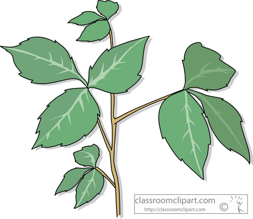 Poison Ivy clipart #2, Download drawings
