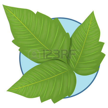 Poison Ivy clipart #15, Download drawings