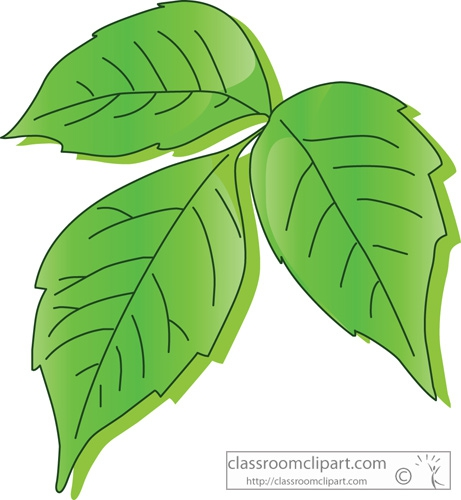 Poison Ivy clipart #20, Download drawings