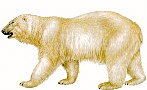 Polar  Bear clipart #15, Download drawings