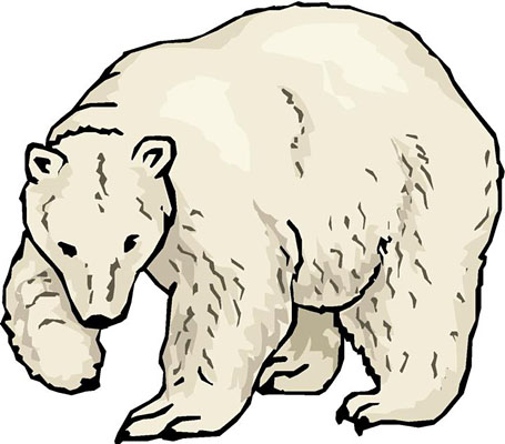Polar  Bear clipart #17, Download drawings