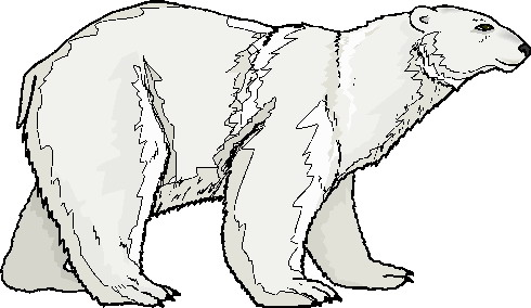 Polar  Bear clipart #4, Download drawings