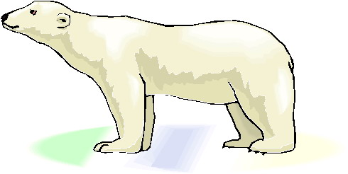 Polar  Bear clipart #8, Download drawings