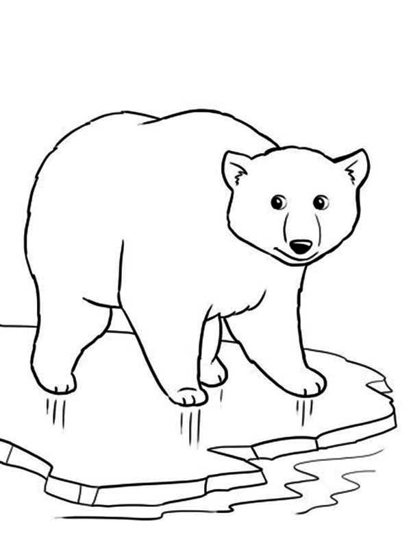Download Polar Bear coloring for free - Designlooter 2020