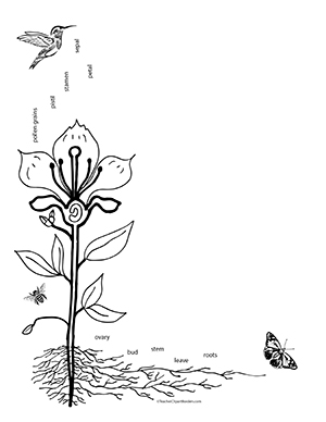 Pollination clipart #9, Download drawings