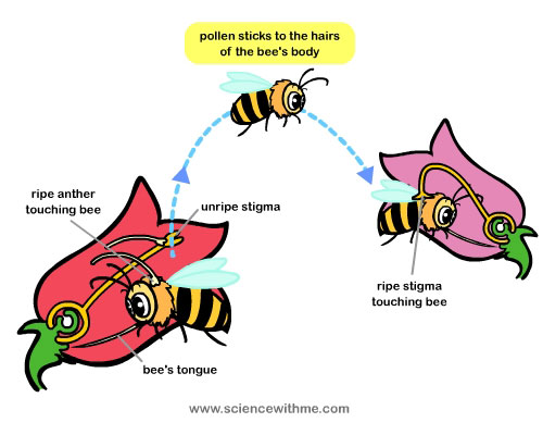 Pollination clipart #8, Download drawings