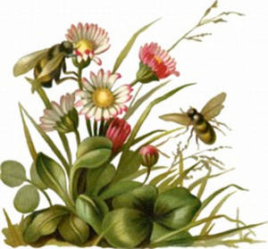 Pollination clipart #3, Download drawings