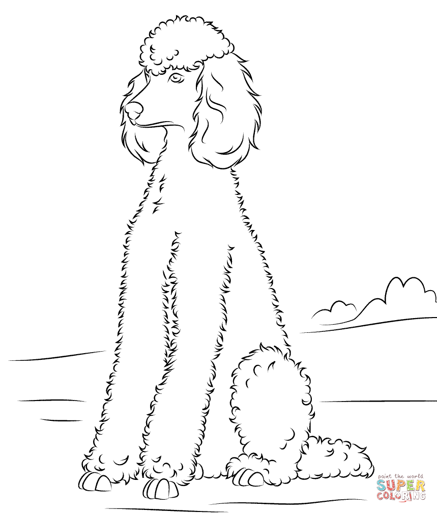 Poodle coloring #6, Download drawings