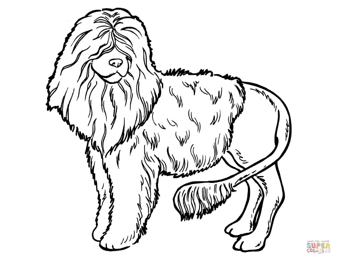 Poodle coloring #4, Download drawings