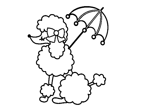 Poodle coloring #18, Download drawings