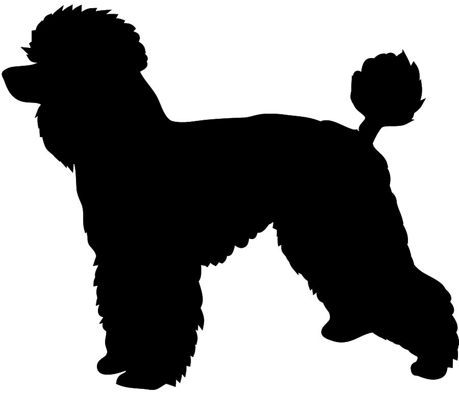 Poodle svg #397, Download drawings