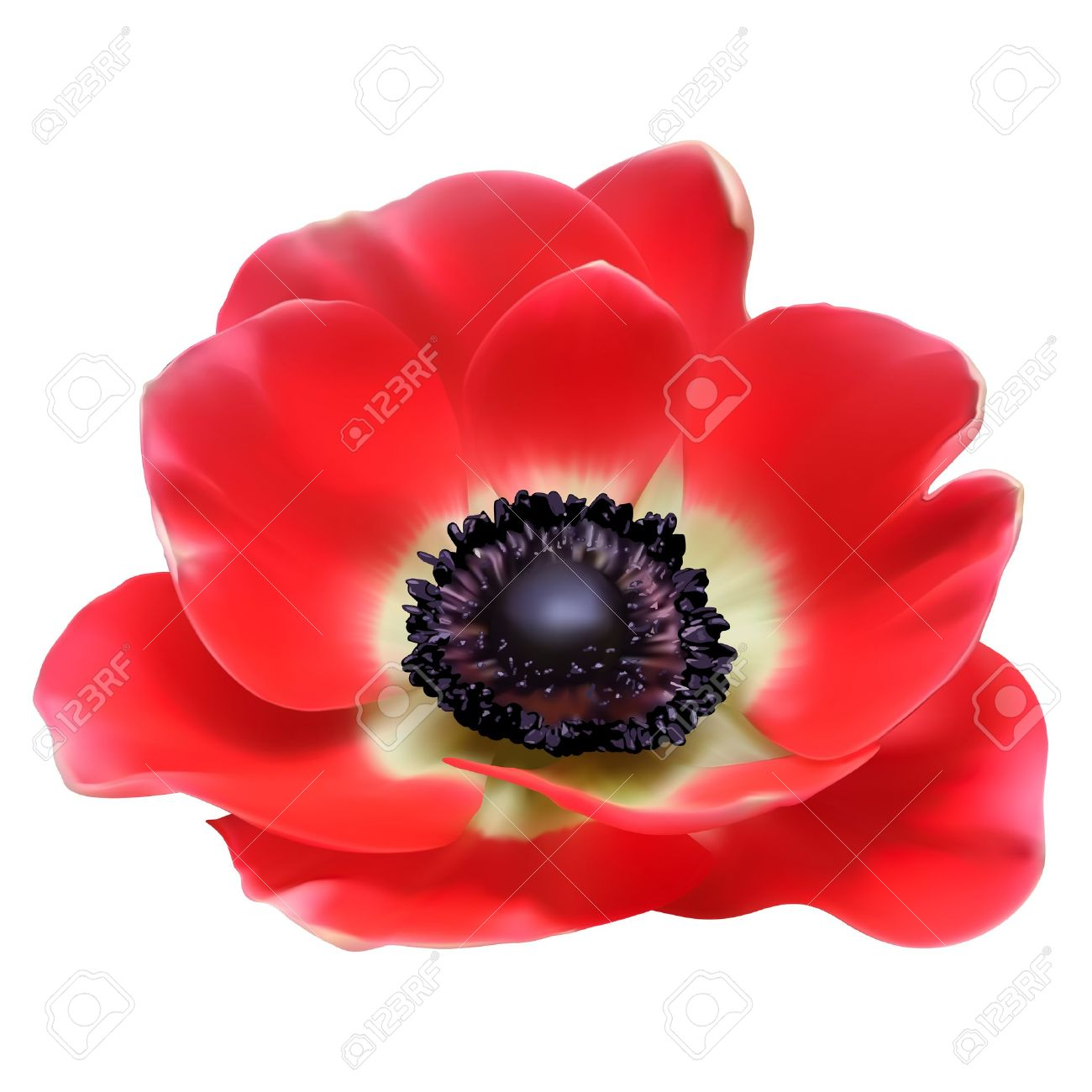 Poppy clipart #12, Download drawings