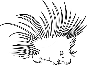 Porcupine clipart #11, Download drawings