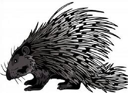 Porcupine clipart #3, Download drawings