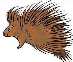 Porcupine clipart #6, Download drawings