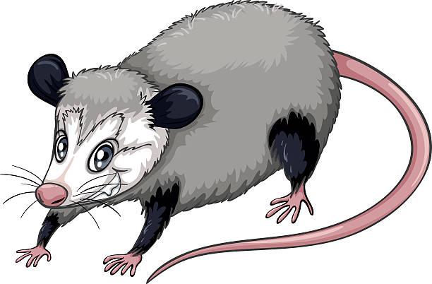 Possum clipart #10, Download drawings