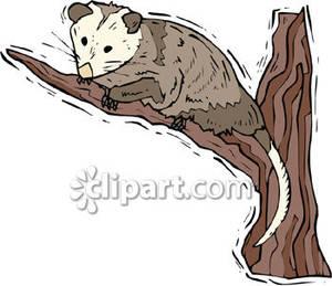 Possum clipart #1, Download drawings