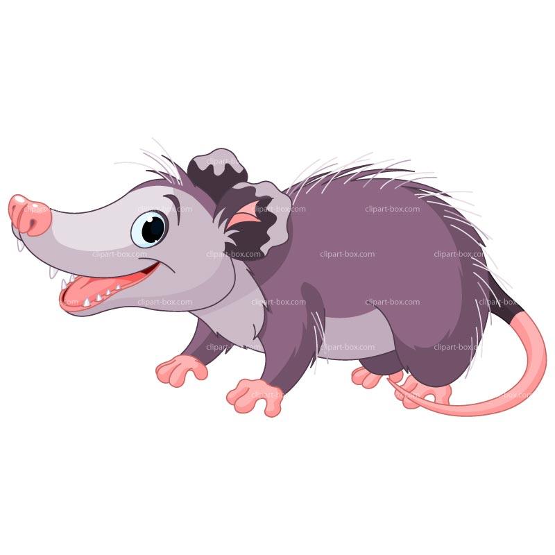 Possum clipart #16, Download drawings