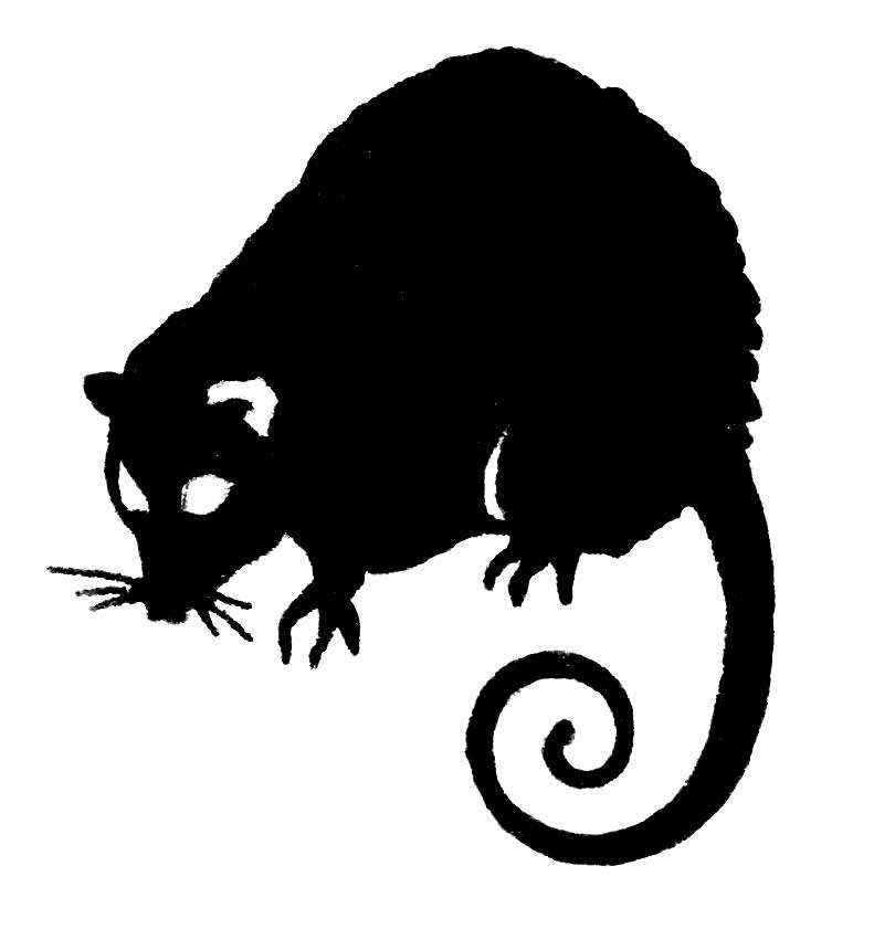 Possum clipart #12, Download drawings