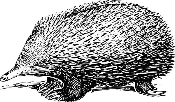 Possum svg #15, Download drawings