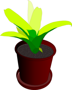 Pot Plant clipart #6, Download drawings