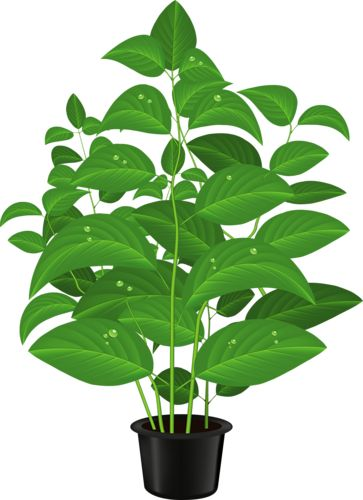 Pot Plant clipart #17, Download drawings
