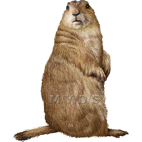Prairie Dog clipart #19, Download drawings