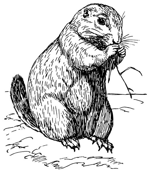 Prairie Dog clipart #6, Download drawings