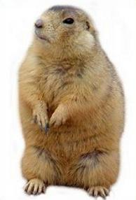 Prairie Dog clipart #2, Download drawings