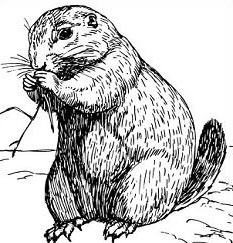 Prairie Dog clipart #3, Download drawings