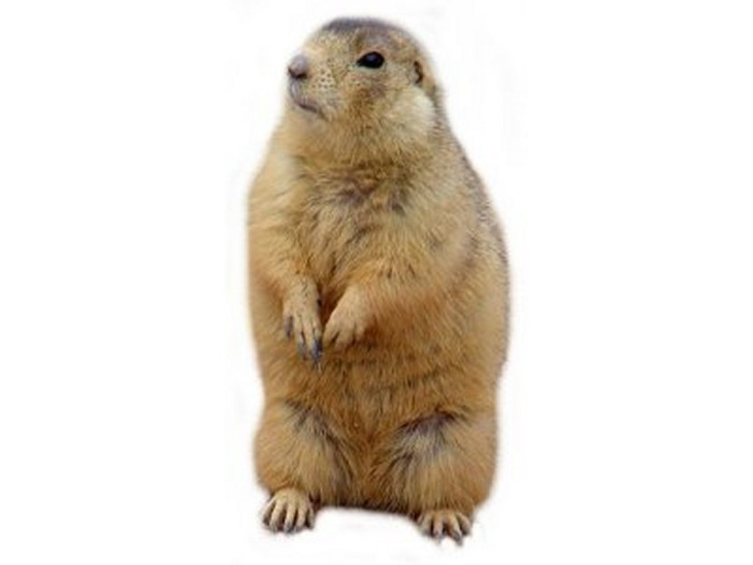 Prairie Dog clipart #4, Download drawings